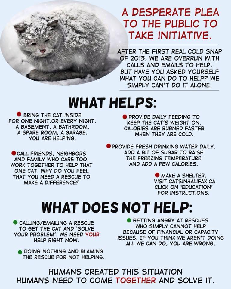what-to-do-for-animals-in-distress-in-winter